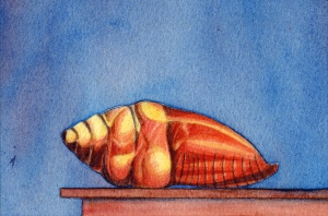 THE SHELL III - WATERCOLOR ON PAPER